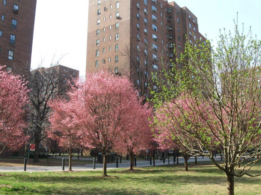 springtime bloom stuyvesant manhattan nyc